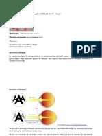 Analiza SWOT - Copy.docx