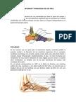 ANATOMIA Y FISIOLOGIA DE LOS PIES.docx