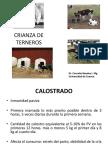 4crianzadeterneros-140524195135-phpapp01