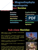 rosidae-2012.pdf