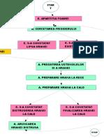 Miru Cristina-Proces de Preparare a Hranei