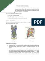 Tipos de Motor Diesel