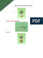 10 EJEMPLOS DE PLANTAS SIN FLORES.docx