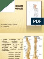 Anatomia Si Biomecanica Articulatiilor Coloanei Vertebrale