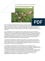Manuale Genesa Crystal Pentasfera Ecocreando