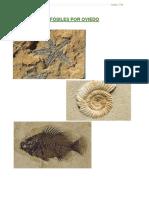 Fósiles1