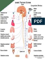 Autonomic Nervous System 1