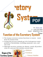 excretorysystem-130619031624-phpapp01