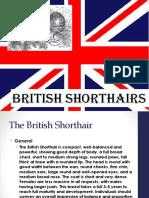 British Short Hair