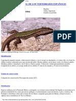 Enciclopedia vertebrados españoles
