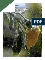 Acompanamiento_en_duelos_prohibidos.pdf