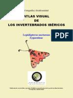 AVII Lepidopteros Nocturnos Zygaeninae