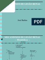 Mecanismos de Lesão Renal