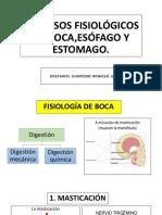 Fisiologia de Boca Esofago Estomago Ipana 2 Tema