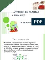 nutricinenplantasyanimales-120914180516-phpapp01