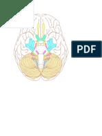 Cranial Nerve Sheet