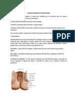 APARATO REPRODUCTOR FEMENIN1
