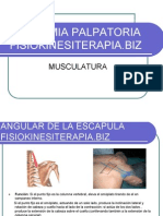 fisioterapia-anatomia palpatoria