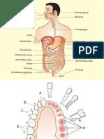 11 Biology NCERT Book Chapter (16)