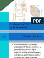 El Sistema Esquelético y Las Articulaciones presentación