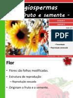 V 5angiospermas Florfrutoesemente 110814212252 Phpapp01