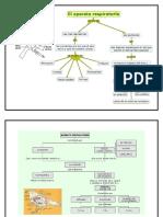 Biologia 7 - Sistema Respiratorio Animal y Circulatorio