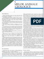 Atlas Zoologic PDF