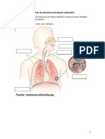 Sistema Respiratorio Guia Para Rotular