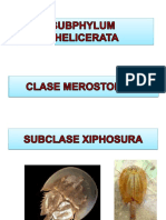 SUBPHYLUM CHELICERATA