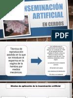 Inseminación Artificial Cerdos