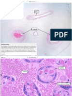Histology Reproduction
