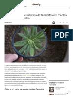 Diagnóstico de Deficiências de Nutrientes Em Plantas de Cannabis Doente _ Folhoso