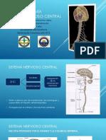 Neuroanatomadelsistemanerviosocentral 150217204619 Conversion Gate01