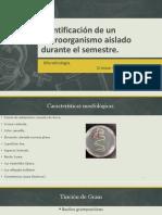 micro examen.pptx