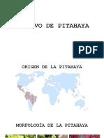 Pita Haya