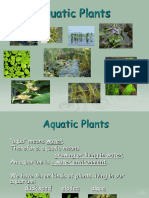 Aquatic Plants Powerpoint