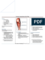 Posterior Compartment of the Thigh