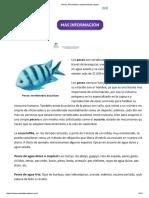 Peces, Información, Características y Tipos