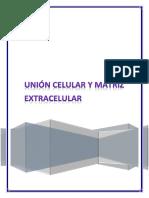 Seminario Matriz extracelular y unión celular.docx