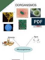 1.1. Clasificacion de Los Microorganismos