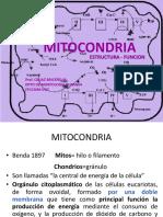 13.MITOCONDRIA
