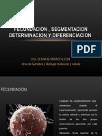 23. Fecundacion, Segmentacion y Determinacion Celular