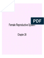 Female Reproductive System Slides