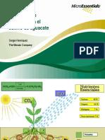 Absorción de Nutrientes en El Cultivo de Aguacate