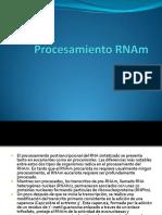4-ProcesamientoRNAm
