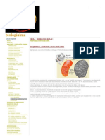 FOSFORILACION OXIDATIVA - biologíalmz