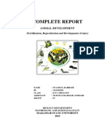 Complete Report Perwan