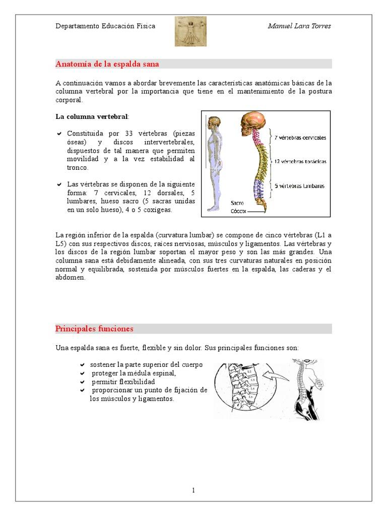 Fantástico Huesos En El Diagrama De Cuerpo Colección de Imágenes ...