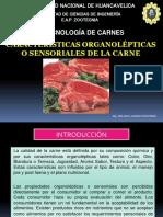 8. Caracteristicas Organolepticas 2013