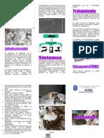88909628-TRIPTICO-leptospirosis.pdf